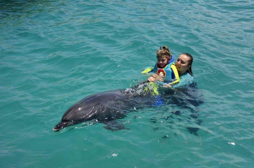 Плавание с дельфинами - Экскурсии в Бодруме - Turteka