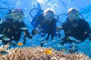 Дайвинг в Сиде - Погружение с аквалангом - Цена - Фото и Отзывы