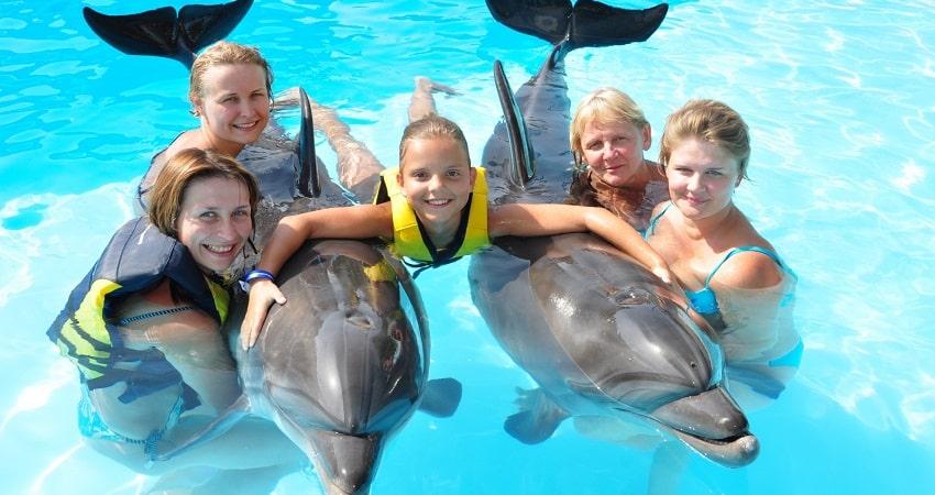 Плавание с дельфинами в Сиде - Шоу Программа - Цена и Отзывы