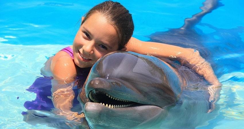 Плавание с дельфинами в Сиде
