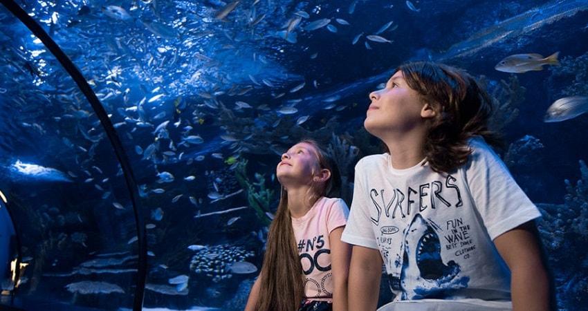 Аквариум из Белека - Билет в Aquarium - Цена - Фото и Отзывы