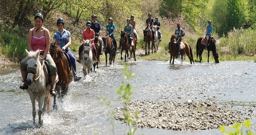 Сафари на лошадях в Мармарисе - Ласковые животные - Turteka