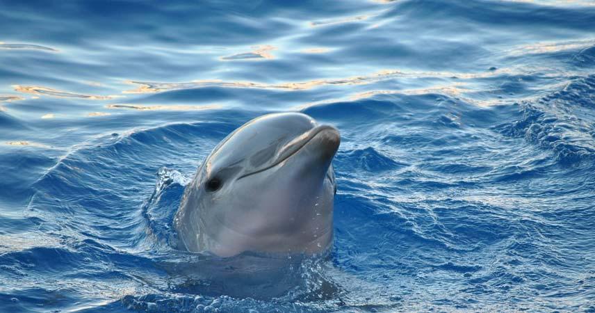 Дельфинарий в Алании - Sealanya - Программа - Цена и Отзывы
