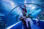 Аквариум в Анталии из Кемера - Aquarium - Фото - Цены и Отзывы