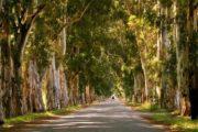 Акьяка из Мармариса - Речка Азмак - Фото, Цена и Отзывы