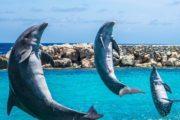 Дельфинарий в Кемере - Программа - Цена и Отзывы